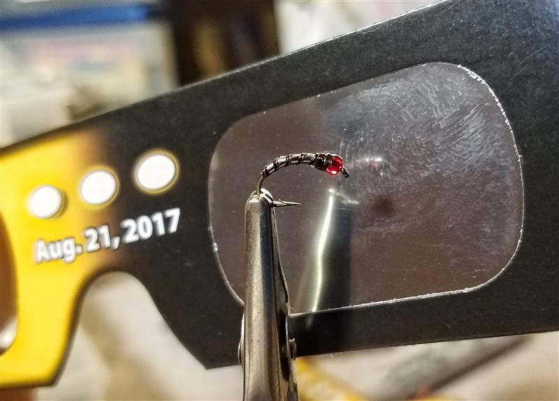 The Total Eclipse Chironomid