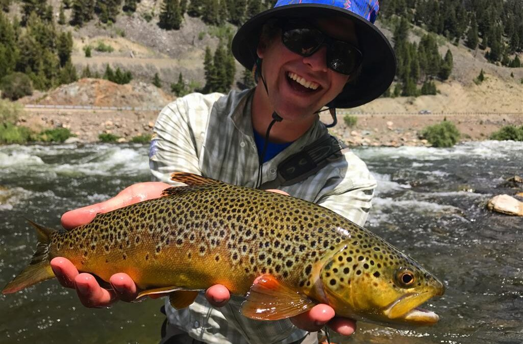 A Summer in South-West Montana (And Idaho, Wyoming and Yellowstone…)