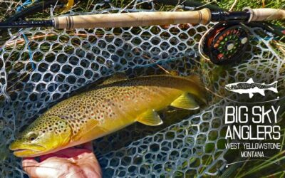 Fall 2020 Trout Spey Update